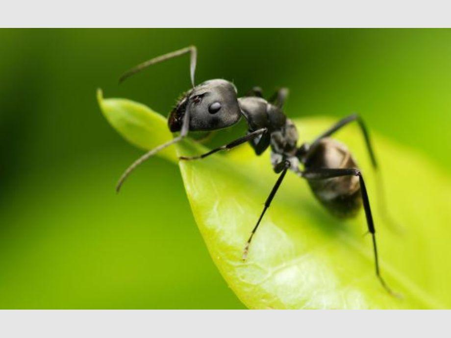 Combate a las hormigas! | Diario de Cuyo - Noticias de San Juan ...