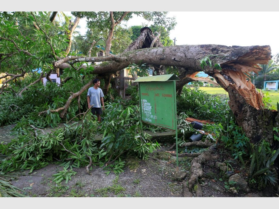 A resident looks at a tree uprooted by strong winds brought by Typhoon Nock-ten which cut through Camarines Sur, Bicol region - Filipinas Tifón