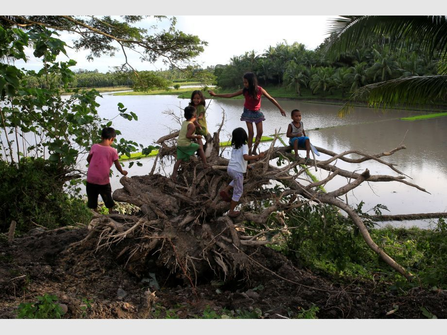 Childrens play at a tree uprooted by strong winds brought by Typhoon Nock-ten which cut through Camarines Sur, Bicol region - Filipinas Tifón