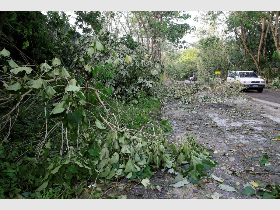 A vehicle drives pass trees and leaves uprooted by strong winds brought by Typhoon Nock-ten which cut through Camarines Sur, Bicol region - Filipinas Tifón