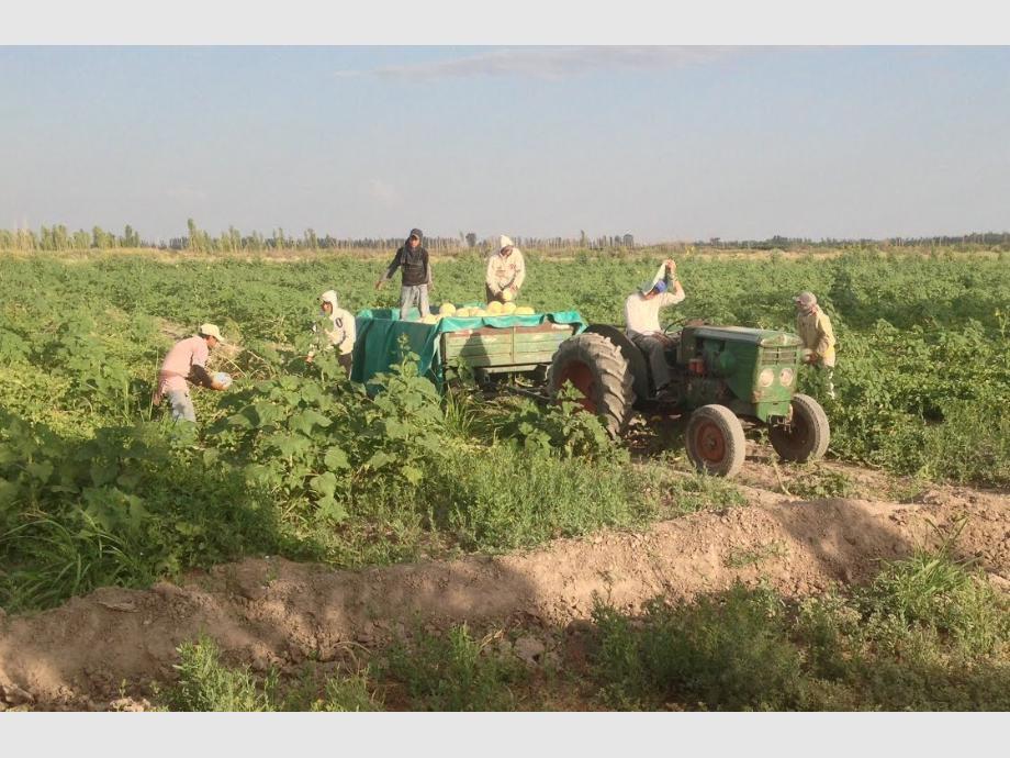 Ayudas. El sector agrícola sanjuanino es uno de los que será beneficiado con la nueva línea de créditos que se puso en marcha con aportes del CFI y a tasas subsidiadas.
