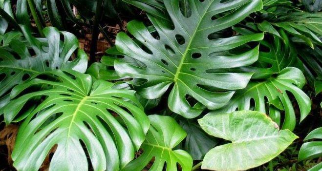 Hojas xl diario de cuyo noticias de san juan for Algunas plantas ornamentales