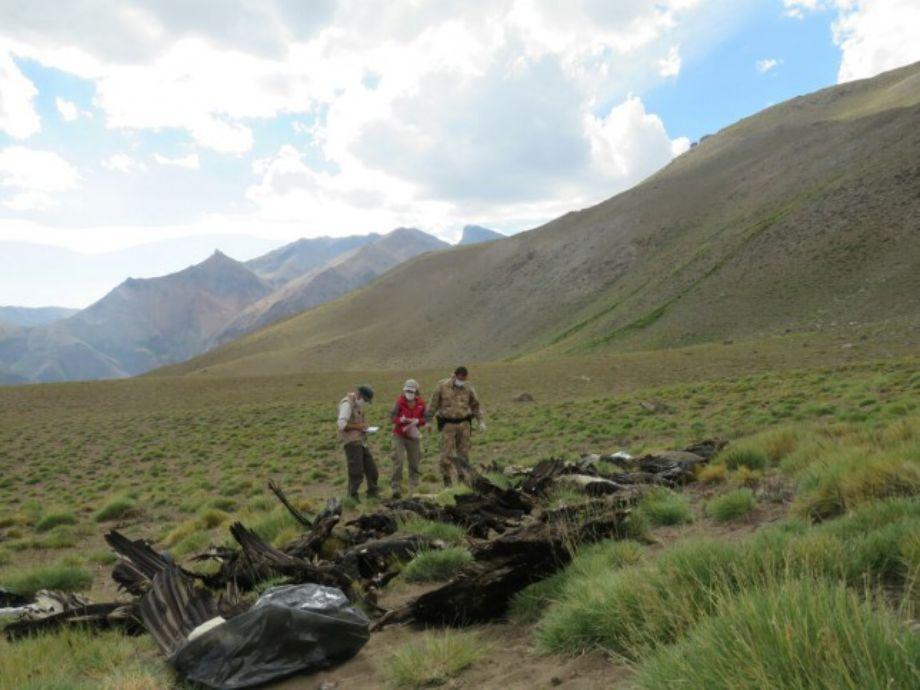 Hallaron un puma y 34 cóndores muertos en Mendoza- mendoza Los Molles cóndor