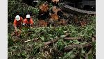 Cleaners work on a fallen tree after heavy rains in Leblon neighbourhood in Rio de Janeiro - río de janeiro Brasil