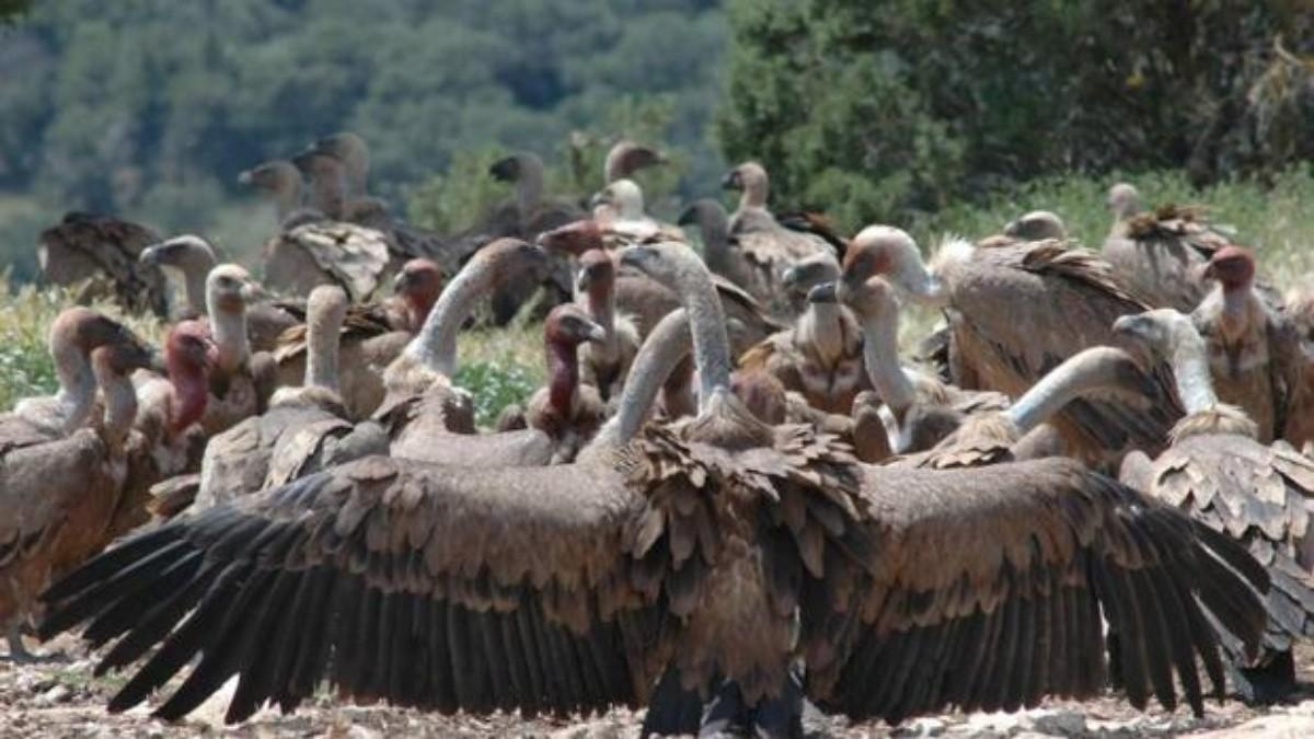 Resultado de imagen para botswana buitres envenenados