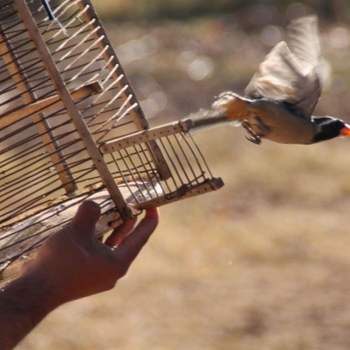 Liberaron 41 aves de distintas especies rescatadas del cautiverio |