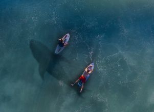 [VIDEO] Tiburones sorprendieron a surfistas -