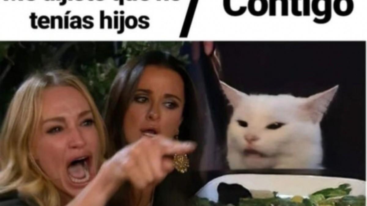 Me Dijiste Que El Origen Del Meme Del Gato Blanco Y De La