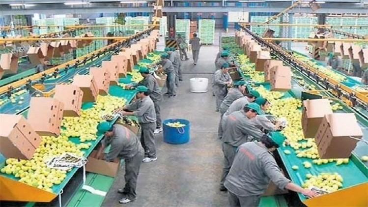 EEUU autoriza importación de limones de Argentina — Confirmado