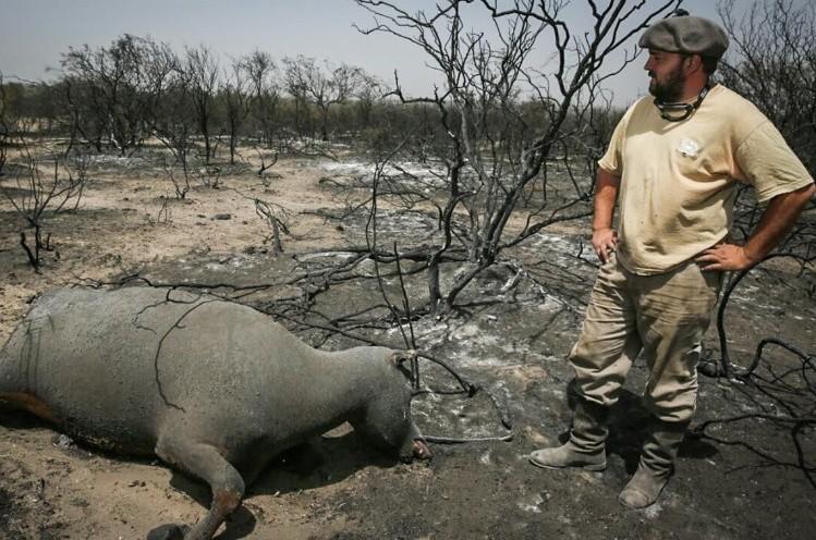 Resultado de imagen para incendios la pampa vacas
