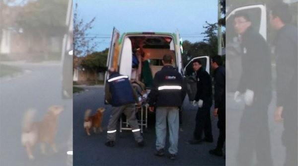 Un perro abrazó a su dueño accidentado hasta que llegó la ambulancia