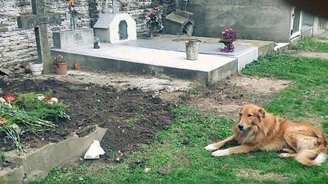 Duerme todos los días en la tumba de sus dueños — Perro fiel