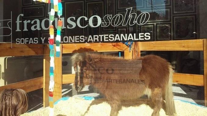 Denunciaron a una mueblería por exhibir un pony en la vidriera