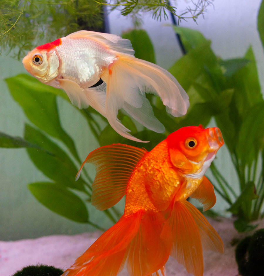 There are many established types of betta fish and new ones being created all the time How do you tell them apart By using the info in our guide