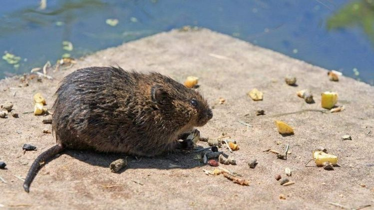 Nene de 2 años murió al comer galletitas con veneno para ratas