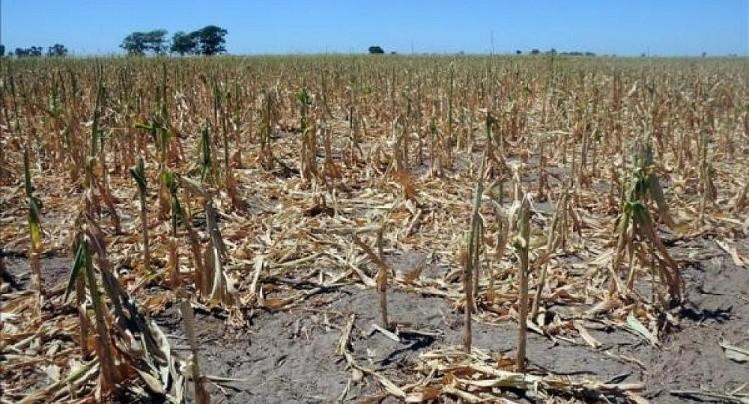 Estiman que se perderán u$s 3.436 millones — Brutal sequía