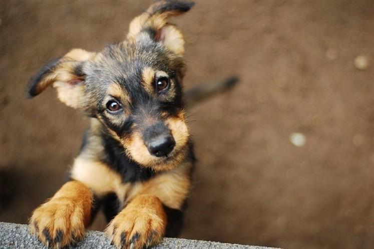 Descubren cuántos años de humano son un año de perro