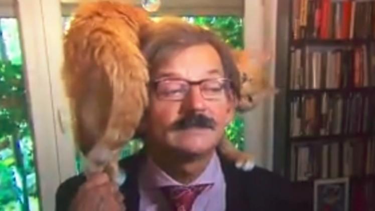 Gato interrumpe entrevista en vivo con importante politólogo, se vuelve viral