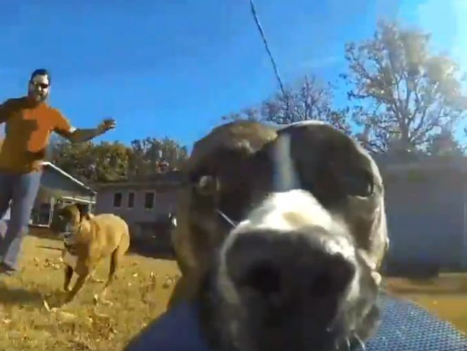 Perro se robó una cámara GoPro y la huida quedó filmada