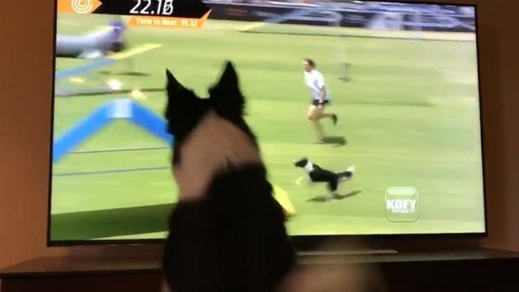 Conmociona perrita en redes sociales por su reacción al verse en tv