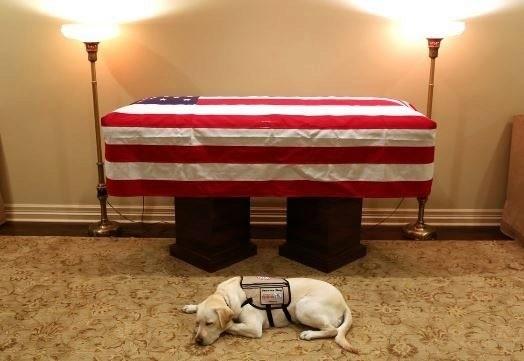 Trasladaron los restos de Bush a Washington